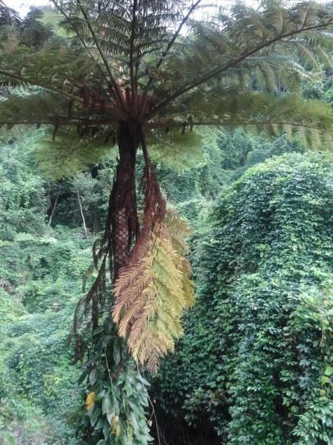 奄美大島の植物たち_b0196913_22413609.jpg