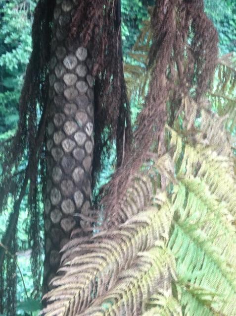 奄美大島の植物たち_b0196913_22420070.jpg