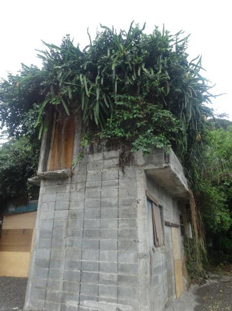 奄美大島の植物たち_b0196913_22422309.jpg