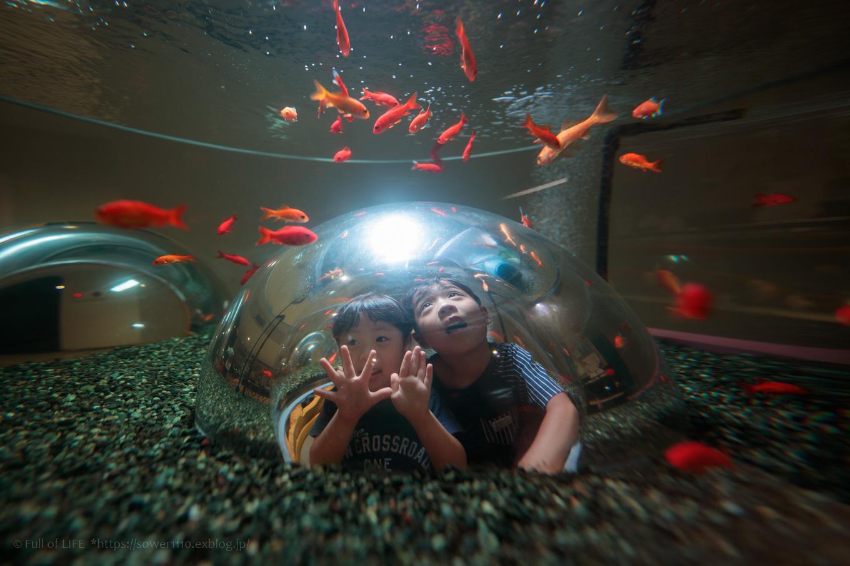 ちびっ子兄弟夏休みに突入!「さいたま水族館」へGo!_c0369219_07563052.jpg