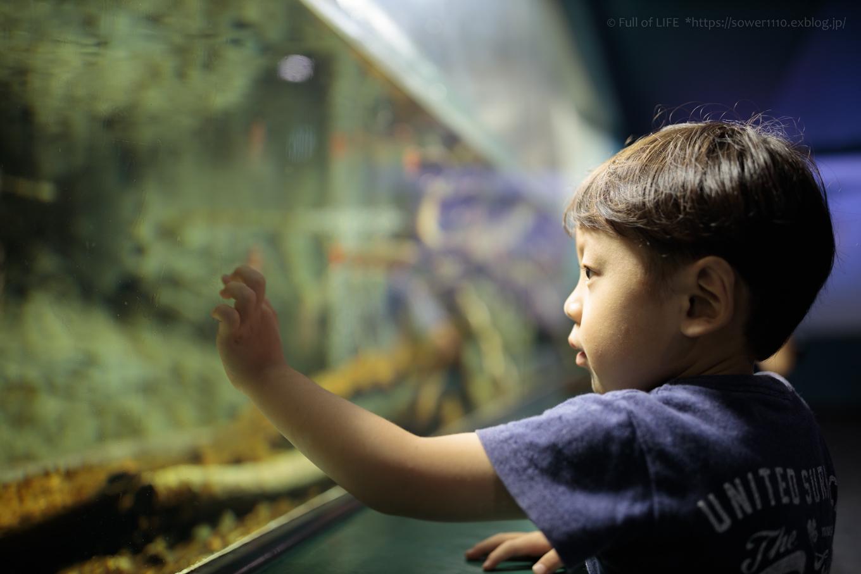 ちびっ子兄弟夏休みに突入!「さいたま水族館」へGo!_c0369219_13294780.jpg