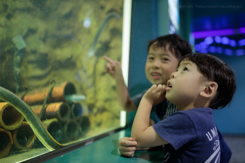 ちびっ子兄弟夏休みに突入!「さいたま水族館」へGo!_c0369219_13464454.jpg