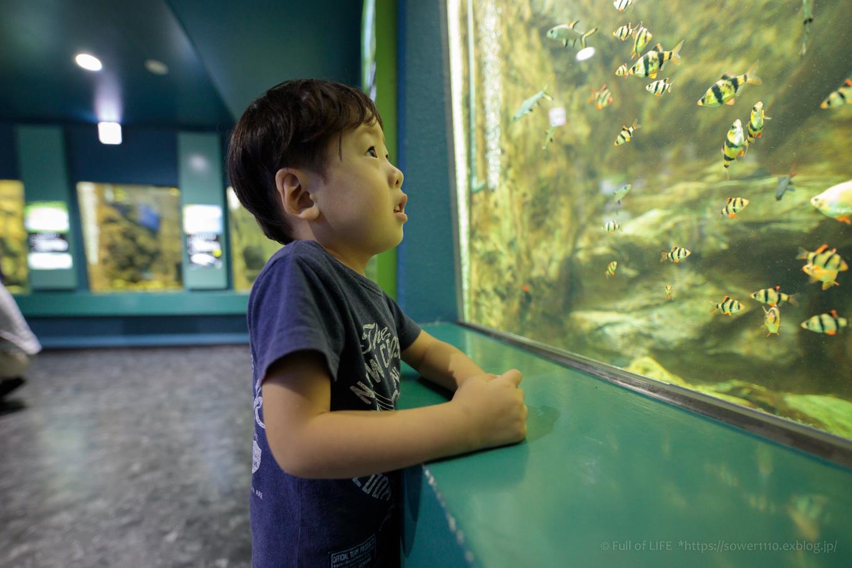 ちびっ子兄弟夏休みに突入!「さいたま水族館」へGo!_c0369219_13571605.jpg