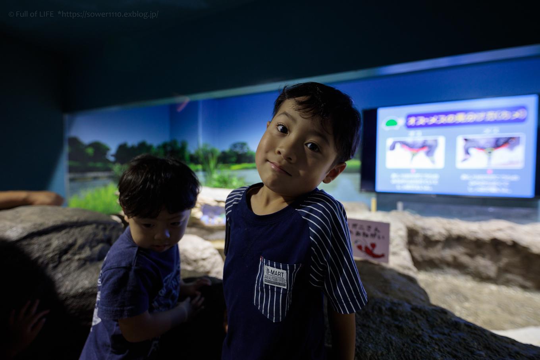 ちびっ子兄弟夏休みに突入!「さいたま水族館」へGo!_c0369219_14011469.jpg