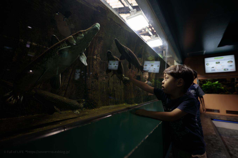 ちびっ子兄弟夏休みに突入!「さいたま水族館」へGo!_c0369219_14235193.jpg