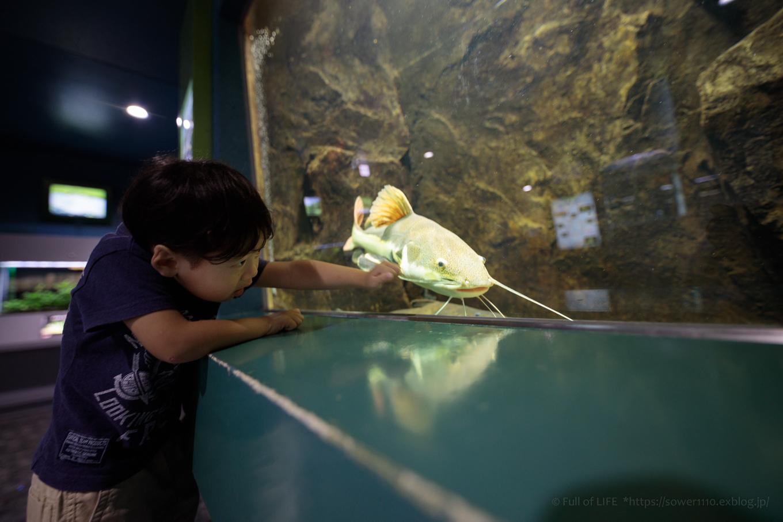 ちびっ子兄弟夏休みに突入!「さいたま水族館」へGo!_c0369219_14523105.jpg