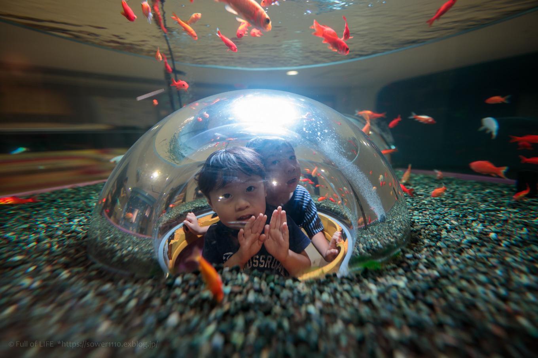 ちびっ子兄弟夏休みに突入!「さいたま水族館」へGo!_c0369219_15032833.jpg