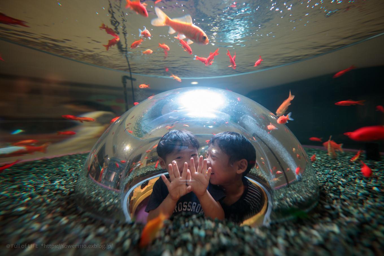 ちびっ子兄弟夏休みに突入!「さいたま水族館」へGo!_c0369219_15073480.jpg