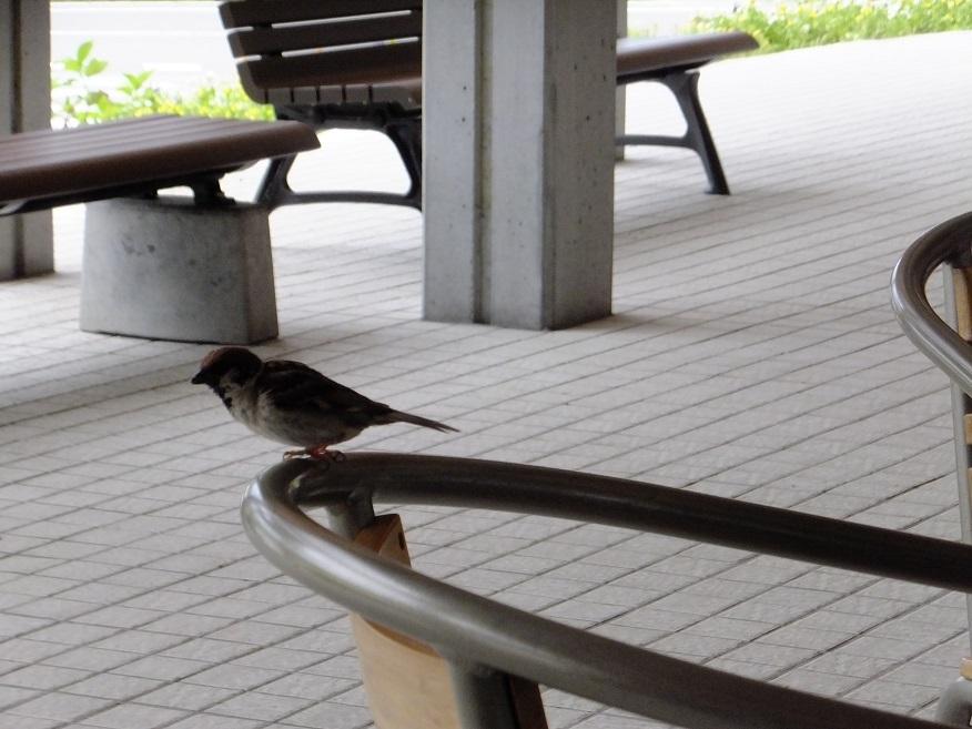 小鳥_e0193247_16385131.jpg