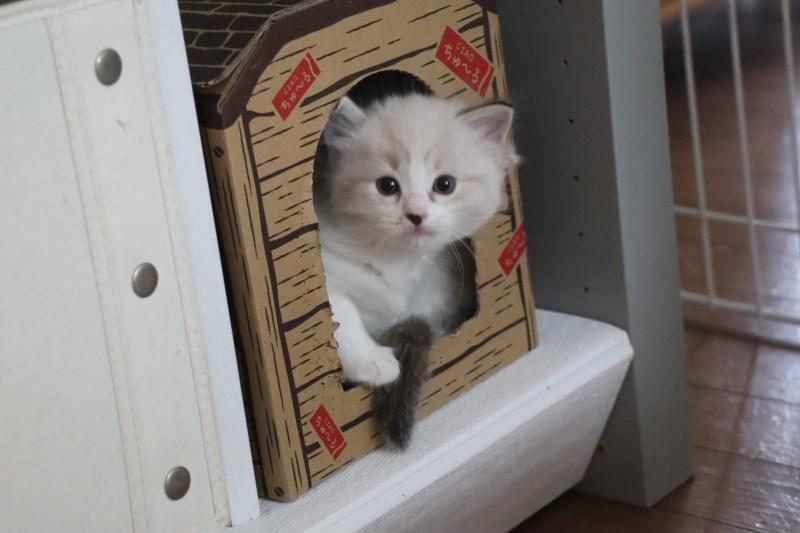 今日の子猫達 ルチル君多め_a0285571_22255552.jpg