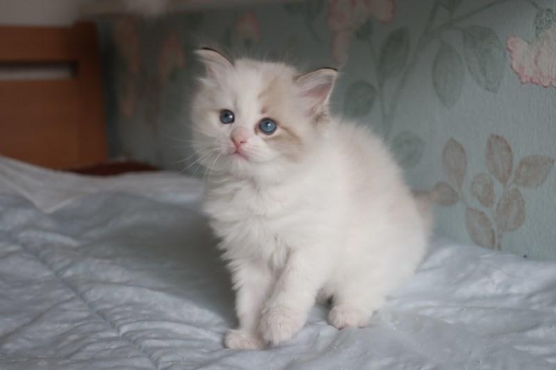 今日の子猫達 ルチル君多め_a0285571_22260195.jpg