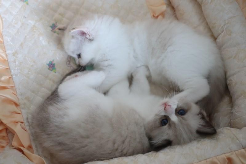 今日の子猫達 ルチル君多め_a0285571_22260893.jpg
