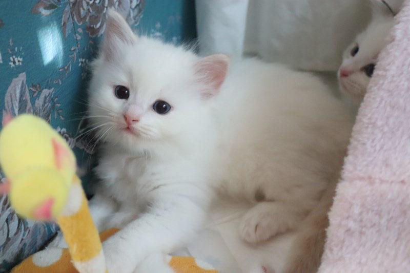 今日の子猫達 ルチル君多め_a0285571_22262096.jpg
