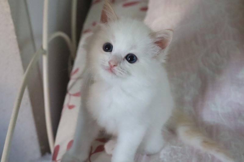 今日の子猫達 ルチル君多め_a0285571_22263379.jpg