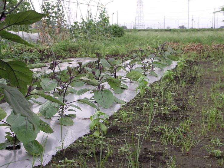 ジャガイモは掘れないし草だらけ_d0225575_22060679.jpg