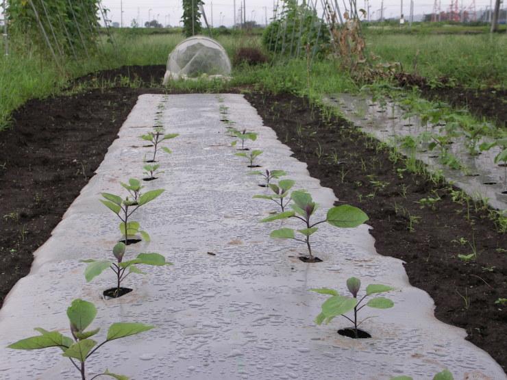 ジャガイモは掘れないし草だらけ_d0225575_22062084.jpg