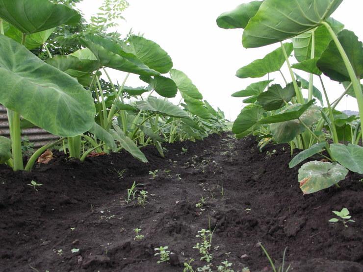 ジャガイモは掘れないし草だらけ_d0225575_22073693.jpg