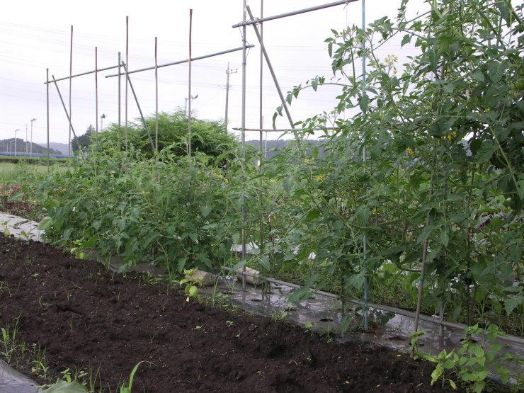 ジャガイモは掘れないし草だらけ_d0225575_22080880.jpg