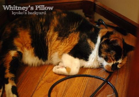 Whitneyさんが好む枕の条件_b0253205_06310918.jpg