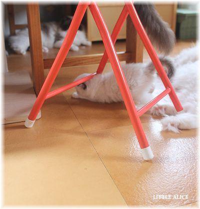 ☆ラグド-ルの仔猫~楽しい自由時間。_c0080132_11103232.jpg