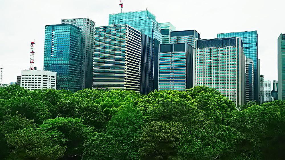 皇居の緑と丸ノ内ビル群 Ⅱ_a0287533_21162713.jpg