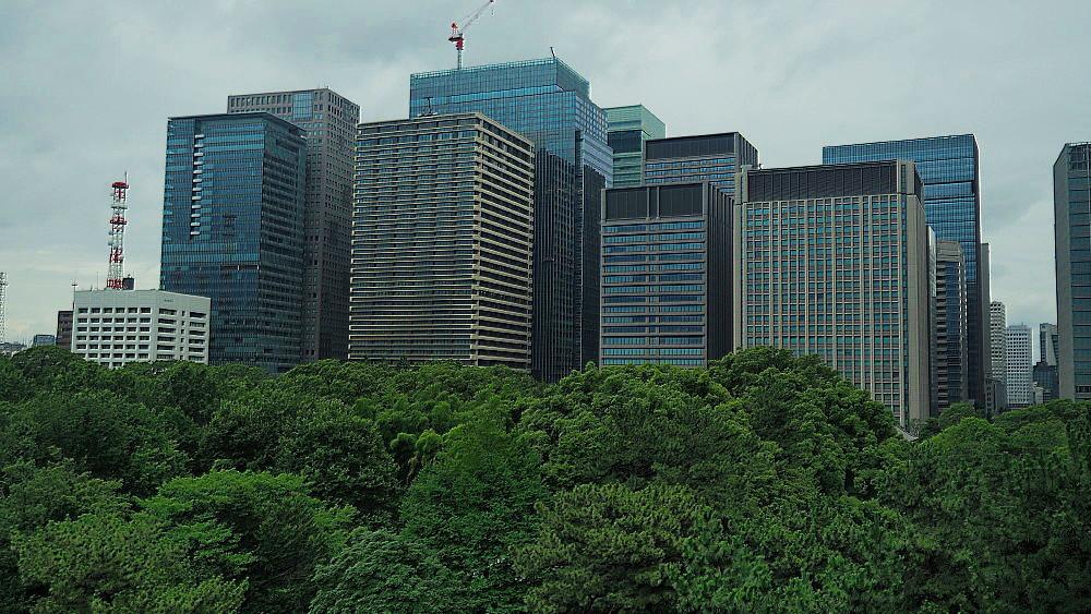 皇居の緑と丸ノ内ビル群 Ⅱ_a0287533_21162715.jpg
