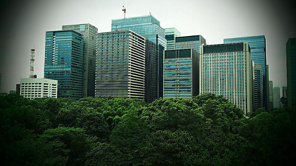 皇居の緑と丸ノ内ビル群 Ⅱ_a0287533_21162795.jpg
