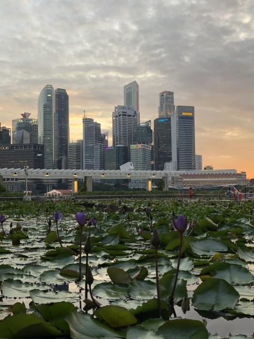 シンガポールの素敵な夜景に癒されて_b0310144_11321333.jpeg