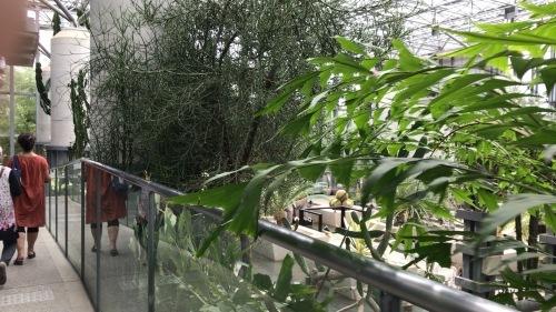 奇跡の星の植物園_c0335145_21511259.jpeg