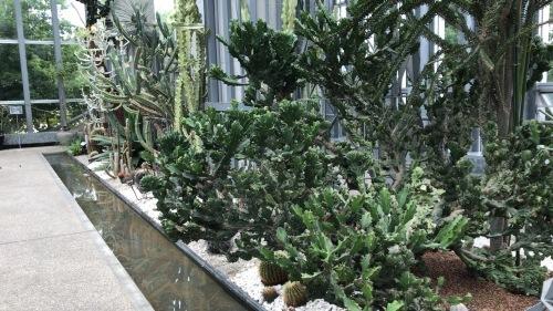 奇跡の星の植物園_c0335145_21541329.jpeg