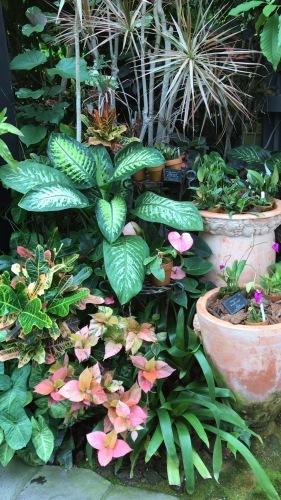奇跡の星の植物園_c0335145_23052781.jpeg