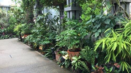 奇跡の星の植物園_c0335145_23055896.jpeg