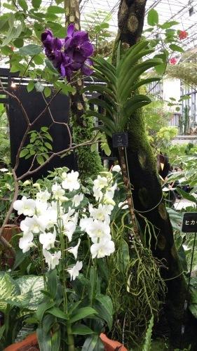 奇跡の星の植物園_c0335145_23331697.jpeg