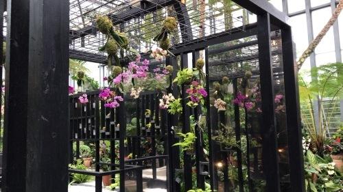 奇跡の星の植物園_c0335145_23335989.jpeg