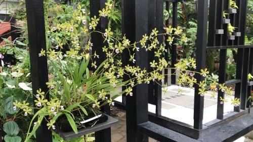 奇跡の星の植物園_c0335145_23342655.jpeg