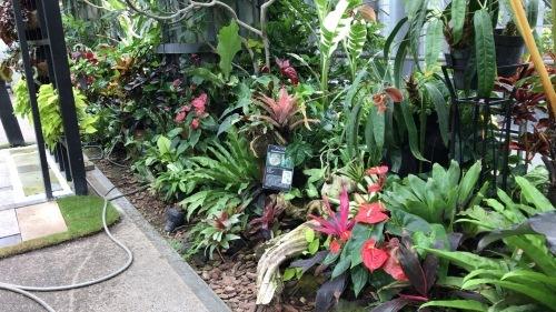 奇跡の星の植物園_c0335145_23344585.jpeg