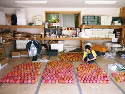 樹上完熟アップルマンゴー 最高級の「煌」&お求めやすいファミリータイプ 最盛期を迎え随時出荷中!_a0254656_17321543.jpg