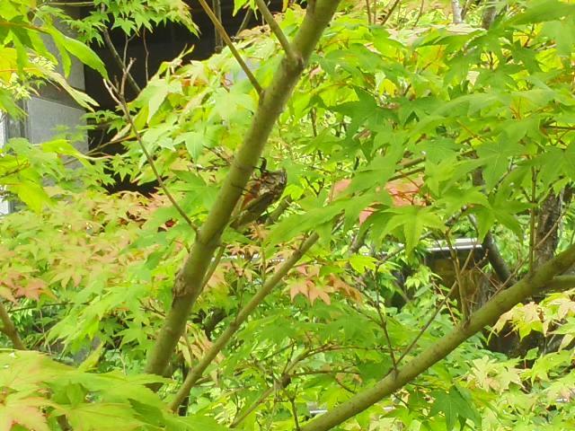わくわく 🌞 いよいよ梅雨明け 🌳 セミのなる木 🌲 夏休みって素敵な響きですね 🍉_f0061067_18550269.jpg