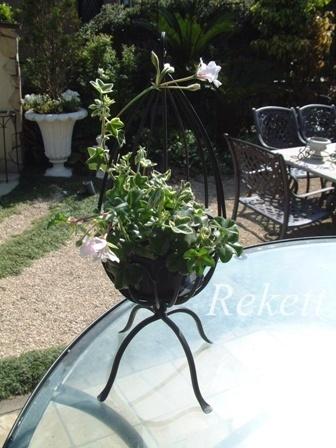 ガーデンにお勧めな植物~❤_f0029571_00221472.jpg