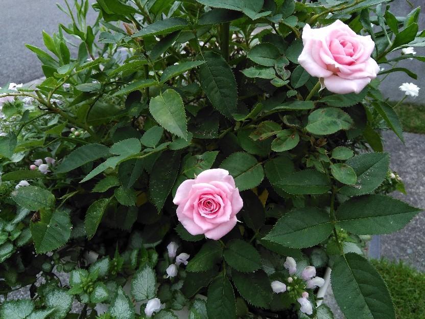 花。_f0098671_14161380.jpg
