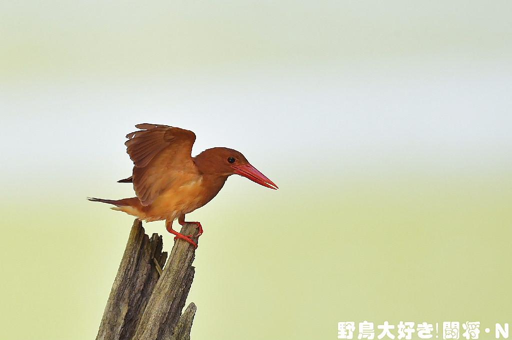 翼でバランス_f0059882_538198.jpg