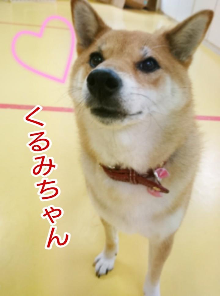 ボール大好きくるみちゃん_f0357682_17480161.jpg