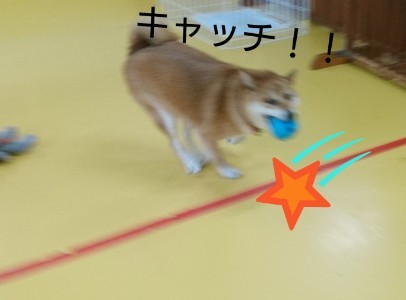 ボール大好きくるみちゃん_f0357682_17482279.jpg