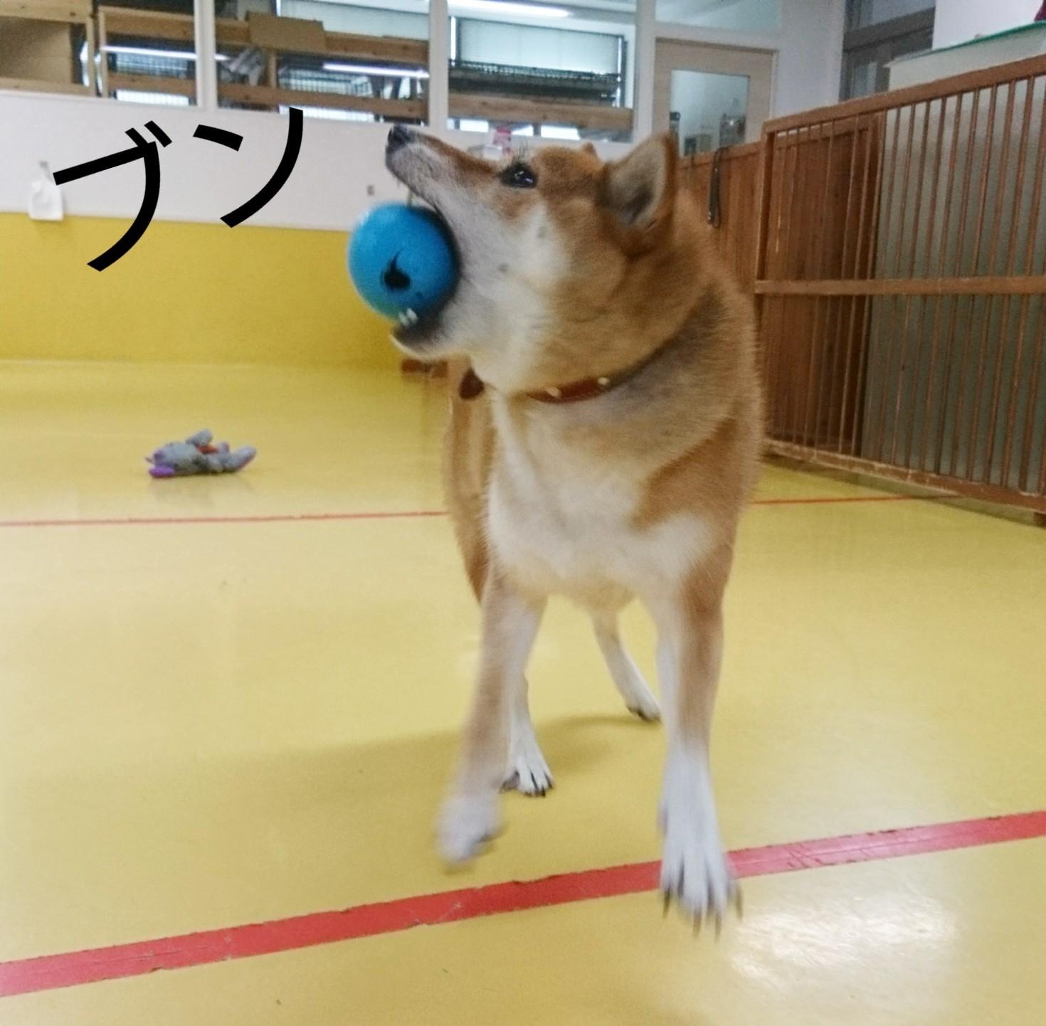 ボール大好きくるみちゃん_f0357682_17484127.jpg
