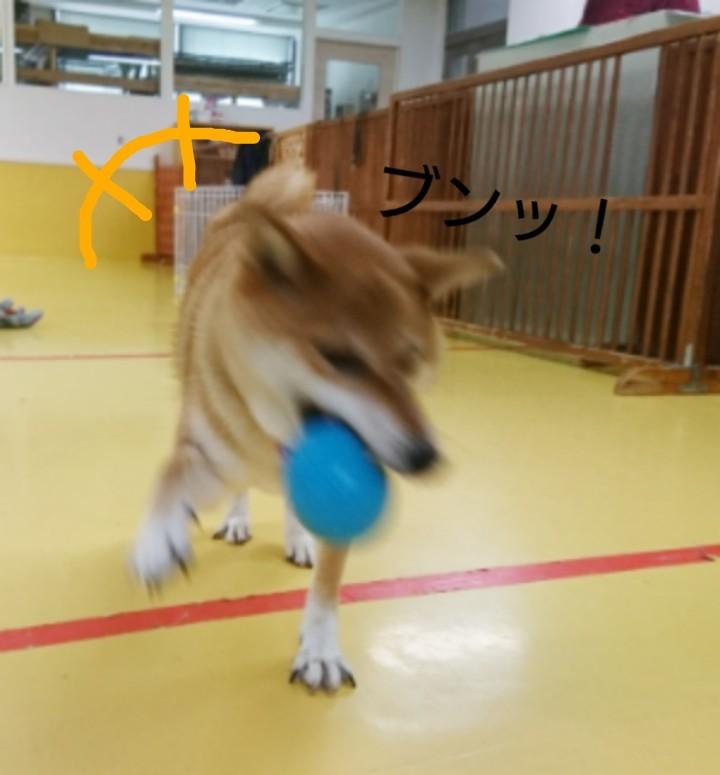 ボール大好きくるみちゃん_f0357682_17485627.jpg