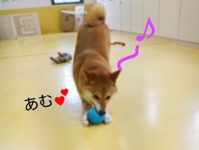 ボール大好きくるみちゃん_f0357682_17492507.jpg
