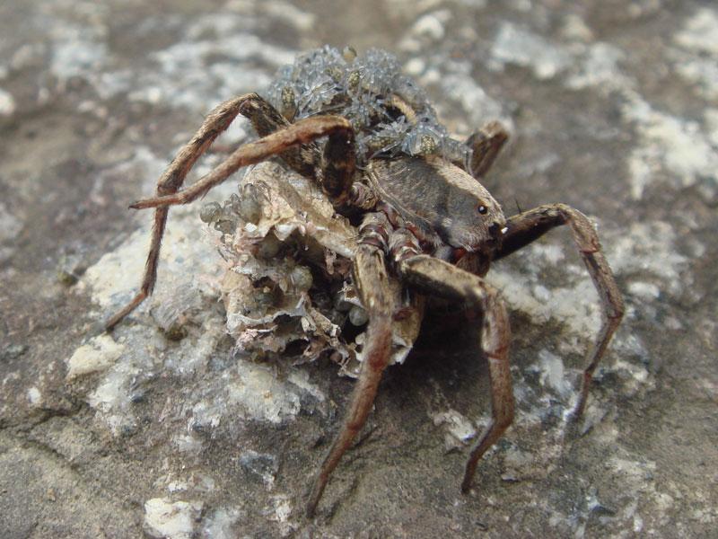 カビに覆われた蜘蛛かと・・・_b0025008_18384794.jpg
