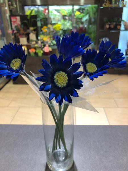 青いガーベラ‼︎_a0300110_18002976.jpg