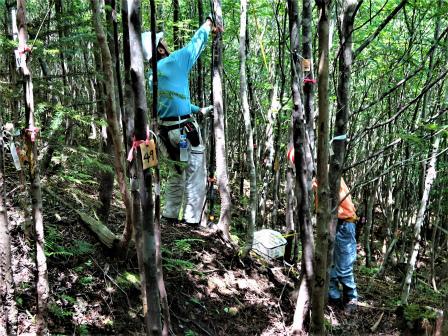 みんなの森活動日記_d0105723_09333586.jpg