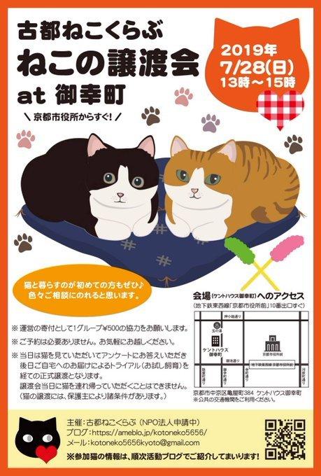 7月28日(日)京都でねこの譲渡会_d0096837_20450875.jpg
